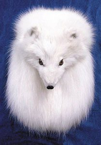 Arctic Fox Full Mask Head On fur Sporran