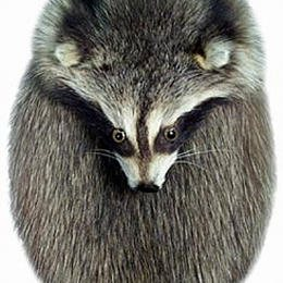 Raccoon Full Mask Head On Sporran